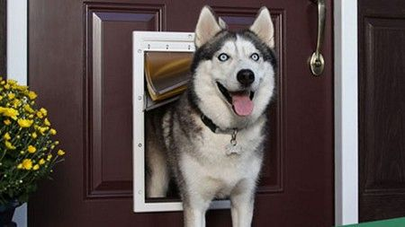 Pet Door Installer in Hemet